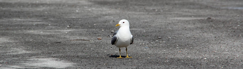 emvau-schlacke, HHLA, CTB Burchardkai - seagull